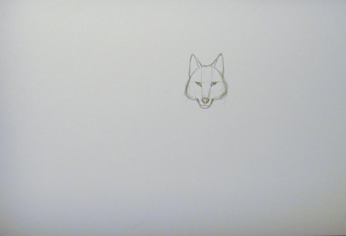 Изобразите нижнюю челюсть. Более детально прорисуйте нос и глаза волка