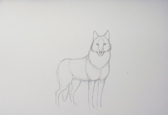 Изобразите лапы и хвост