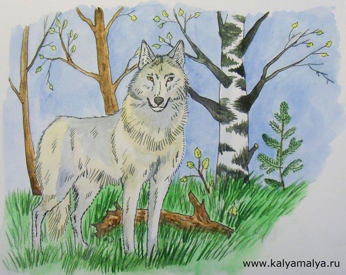 Светло-серой краской раскрасьте остальные части тела волка