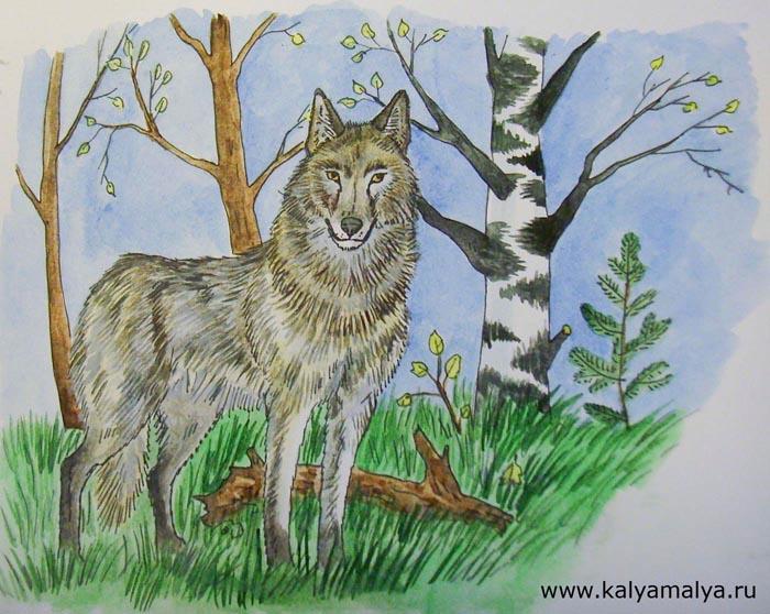 Как нарисовать волка?