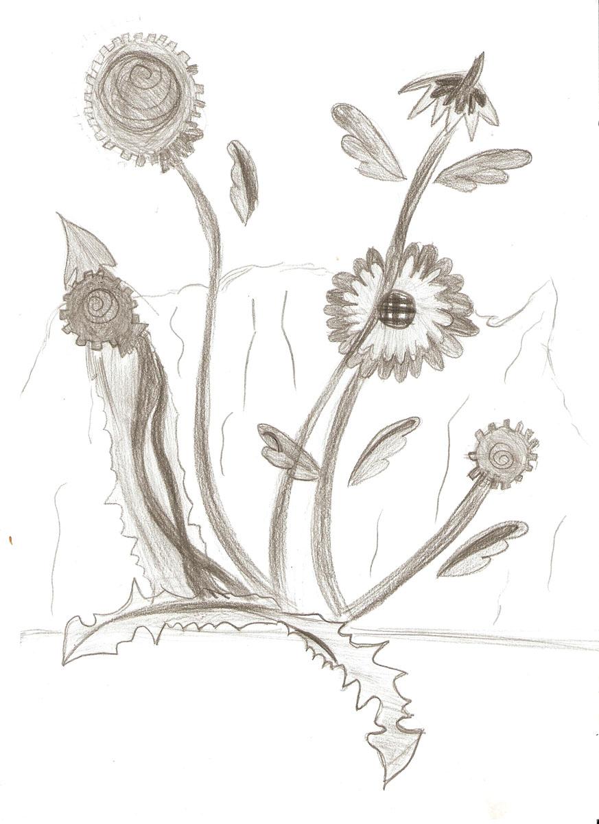 Цветы графика