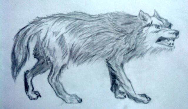 Волк идущий