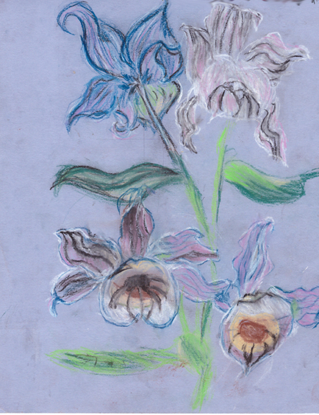 орхидеи для мамы